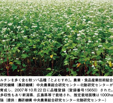 日経バイオテク10月12日号「機能性食材研究」(第22回)、ソバ