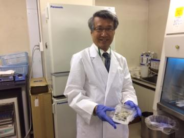 ゲノム創薬研究所、カイコを使って医薬品、機能性食品をスクリーニング