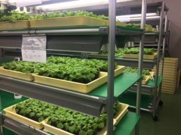 UniBio、植物由来EGFを化粧品向けに本格供給開始へ