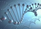テクノスルガ・ラボ、腸内細菌を解析して健康具合を示す指標を開発