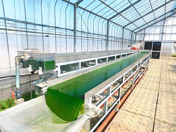 アルガルバイオ(Algal Bio Co.,Ltd)