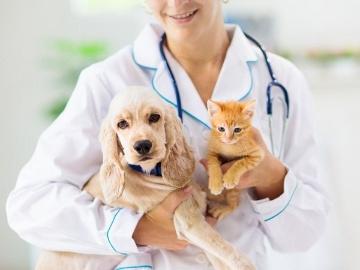 ペットのゲノム医療が人間の医療を追い越す日