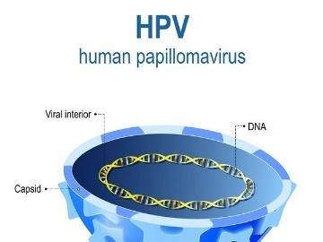順天堂大、iPS細胞化で極微量キラーT細胞を安定供給
