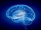 食や食成分に対する認知機能改善効果はどこまで期待できるか