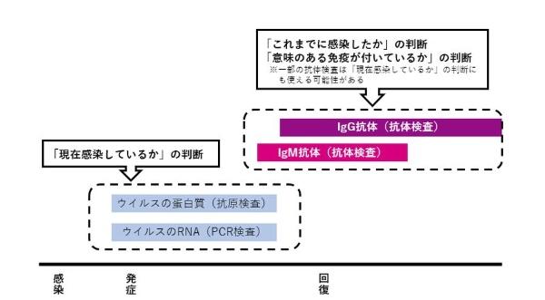 図1 PCR検査、抗原検査、抗体検査の位置付けのイメージ
