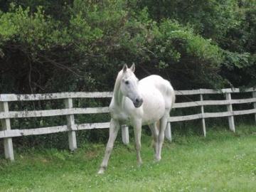 27年前のダービー馬が東大牧場で余生、寄付で牧場の設備を更新