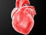 アステラス、慶應福田教授のiPS細胞由来心筋細胞ベンチャーに出資