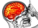 帝人とJCR、歯髄幹細胞のフェーズI/IIで急性期脳梗塞患者に投与開始