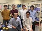 熊本大勝田氏ら、遺伝子発現制御する核酸医薬の新規モダリティ開発中