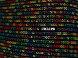 米Sherlock社、ゲノム編集技術用いた新型コロナの診断薬が緊急使用許可