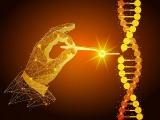 中国研究者、CRISPR/Cas9で新型コロナの研究用モデルマウスを作製
