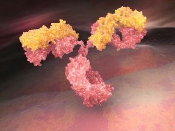 インドBiocon社、新型コロナに抗CD6抗体がインドで緊急使用許可