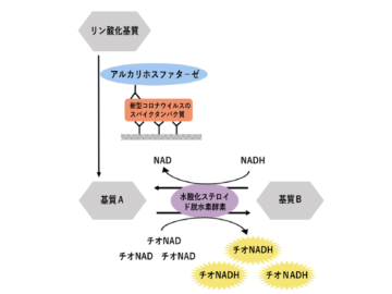 早稲田大、新型コロナの高感度抗原検査法を開発