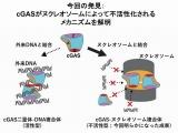 創薬標的同一分子のクライオ電顕成果5報が同日発表、Nature誌3報とScience誌2報