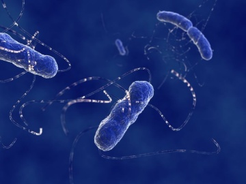 東工大、大腸菌の人工ゲノムを構築する産学連携プロジェクトが発足