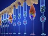 神戸アイセンター病院、iPS細胞由来網膜シートの1例目移植