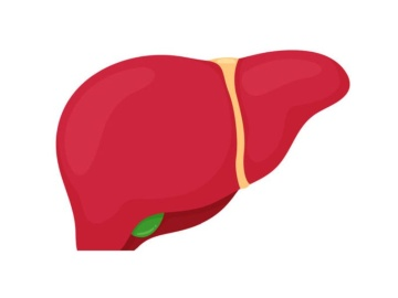 米CymaBay社、胆管炎へのPPARδ作動薬の第3相で良好結果