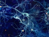 慶應大と大日本住友、臨床用iPS細胞由来のグリア細胞指向性神経幹細胞の誘導法を開発