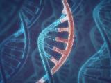 東京医歯大とメドレックス、miRNAの経皮投与で抗腫瘍効果