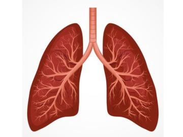 米Rockefeller大学、COVID-19の研究モデルとして有望な幹細胞由来肺芽を作製