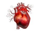 英Genomics社、冠動脈疾患を予測できるリスク解析ツールを開発