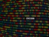 米Vertex社とスイスCRISPR社、異常ヘモグロビン症のゲノム編集療法で契約改定