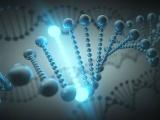 米Voyager社、ハンチントン病対象の遺伝子治療で臨床試験開始許可を獲得