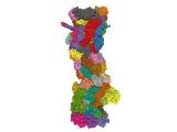 理科大宮本氏ら、変異型KRASの分解を誘導する化合物を創製
