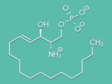 京大など、S1P受容体の活性化機構を解明