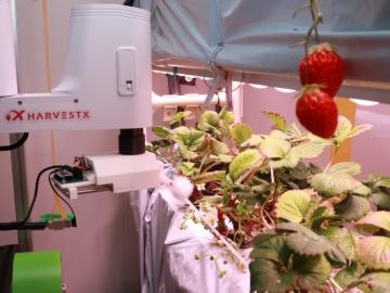 HarvestX、東京大にイチゴ工場設置で自動授粉・収穫ロボ開発を加速