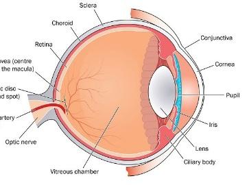 仏GenSight Biologics社、レーバー遺伝性視神経症対象の遺伝子治療第3相で好結果