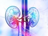 米Arrowhead社、腎細胞がん対象ARO-HIF2第1b相の中間解析で腫瘍縮小効果