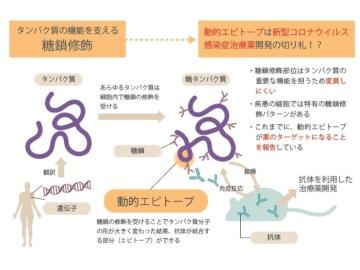 北大、SARS-CoV-2の新規治療薬開発へクラウドファンディング
