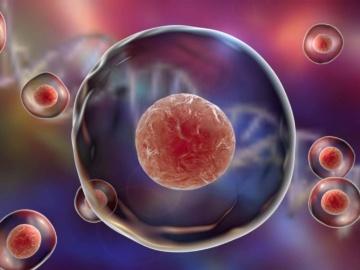 iPS細胞、ユニバーサルなT細胞療法目指すリバーセルとサイアス