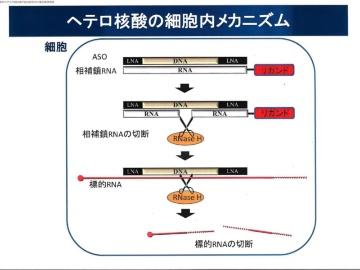 東京医歯大など、アルツハイマー病創薬に新地平を拓く
