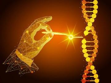 ゲノム編集療法、VC Gene Therapyが網膜色素変性症に、バイオパレットは生菌製剤へ活用目指す