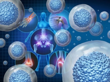 iPS創薬、オトリンクは聴覚障害、ケイファーマはALS治療薬の開発に応用