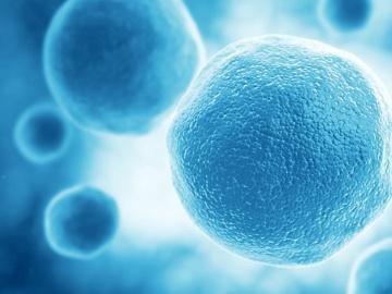 ステムリム、脳梗塞に対するHMGB1の第2相は順調に進行