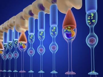 米Editas社、レーバー先天性黒内障のin vivoゲノム編集療法でPOC達成