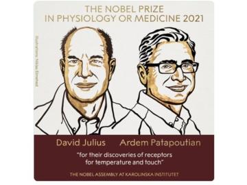 2021年のノーベル生理学・医学賞は「温度と接触の受容体の発見」
