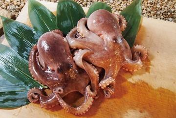 タコ(蛸):完全養殖に向けた技術開発が進む