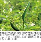 トウガラシ(唐辛子)
