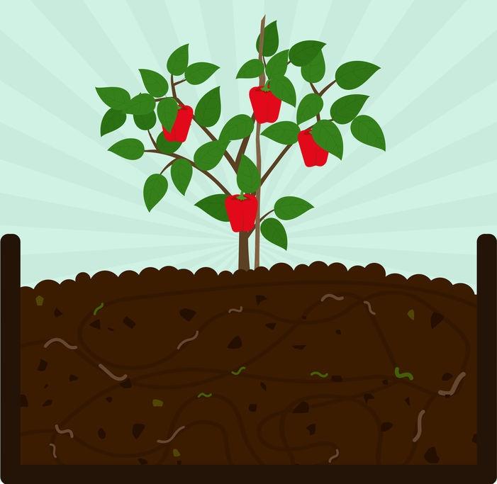 マイクロバイオーム農業