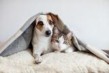 ペット向けの再生医療