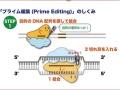 ゲノム編集育種生物の規制対応と産業化
